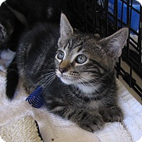 Adopt A Pet :: Robbie - bloomfield, NJ