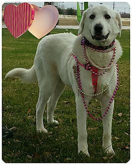 Great Pyrenees/Labrador Retriever Mix Dog for adoption in Terrell, Texas - Pearl