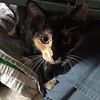 Adopt A Pet :: Panda - Cameron, NC