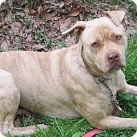 Adopt A Pet :: Dusty - Hillsboro, OH