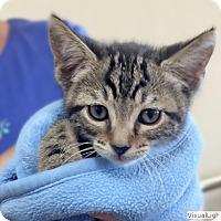 Adopt A Pet :: Carl - Westchester, CA
