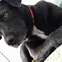 Adopt A Pet :: *HEDDY - Austin, TX