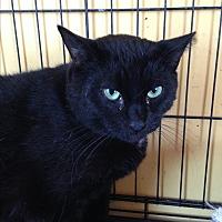 Adopt A Pet :: JONESY - Ridge, NY