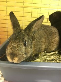 American Mix for adoption in Annapolis, Maryland - Mr. Thumper
