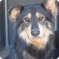 Adopt A Pet :: Shotgun - Rockville, MD