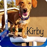 Adopt A Pet :: Kirby - Los Angeles, CA