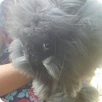 Adopt A Pet :: Dora - Louisville, KY