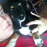 Adopt A Pet :: Kora - Zolfo Springs, FL