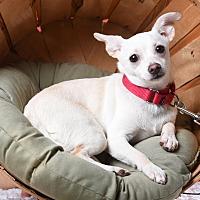 Adopt A Pet :: Nixie - Houston, TX