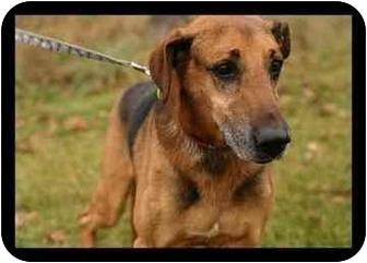 Shepherd (Unknown Type)/Irish Wolfhound Mix Dog for adoption in Northville, Michigan - Beta