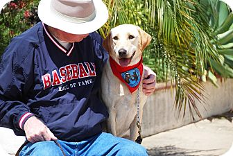 Labrador Retriever Dog for adoption in El Cajon, California - Bryn