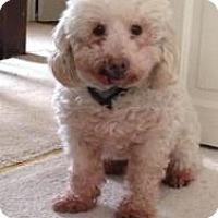 Adopt A Pet :: Gummy Bear - North Benton, OH