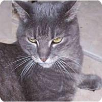 Adopt A Pet :: Polly - Elkton, MD