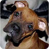 Adopt A Pet :: Toast - Thomasville, GA