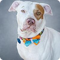 Adopt A Pet :: STEFONYA - Phoenix, AZ