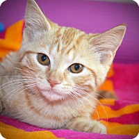 Adopt A Pet :: Honey - Xenia, OH