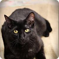 Adopt A Pet :: Boo - Plymouth, MN