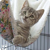 Adopt A Pet :: Megan - Merrifield, VA