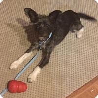 Adopt A Pet :: Dudley - Dayton, OH