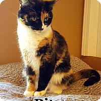 Adopt A Pet :: Bitzy - Bentonville, AR