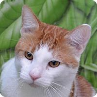 Adopt A Pet :: Deniro - Englewood, FL