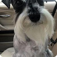 Adopt A Pet :: Ziggy - Halifax, NC