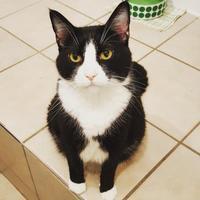Adopt A Pet :: Kipper - Hastings, MN