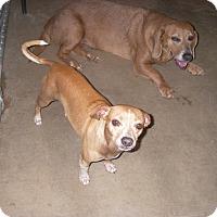 Adopt A Pet :: Jasper - Buchanan Dam, TX