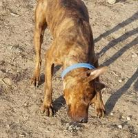 Adopt A Pet :: Teddy - Larned, KS