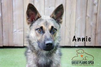 Shepherd (Unknown Type) Mix Dog for adoption in Merriam, Kansas - Annie