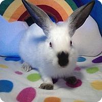 Adopt A Pet :: Angara - Trenton, NC