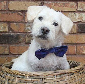 Terrier (Unknown Type, Medium) Mix Dog for adoption in Benbrook, Texas - Buck