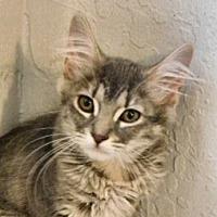 Adopt A Pet :: Charity - Davis, CA