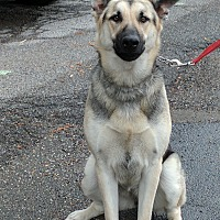Adopt A Pet :: Luna - Middletown, NY