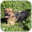 Photo 1 - Shepherd (Unknown Type)/Chow Chow Mix Dog for adoption in Berkeley, California - Ruby