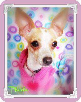 Chihuahua Mix Dog for adoption in Pascagoula, Mississippi - Phoebe