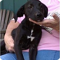Adopt A Pet :: Dylan - Coventry, RI