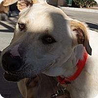 Adopt A Pet :: Trooper - Mission Viejo, CA