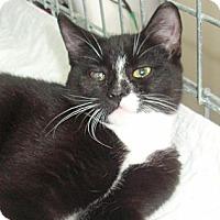 Adopt A Pet :: Jill - Germansville, PA