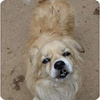 Adopt A Pet :: Willow is as cute as a button! - Leesport, PA