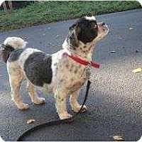Adopt A Pet :: Chloe - Crofton, MD