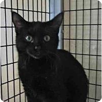 Adopt A Pet :: Jason - Deerfield Beach, FL