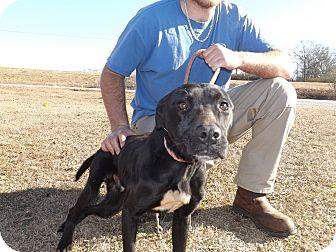 Labrador Retriever Mix Dog for adoption in Thomaston, Georgia - Bruce