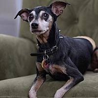 Adopt A Pet :: Coach - Morganville, NJ