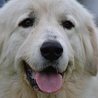 Adopt A Pet :: XP Townley in Texas - Rockaway, NJ