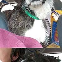 Adopt A Pet :: Esmerelda (Sadie) - Chantilly, VA