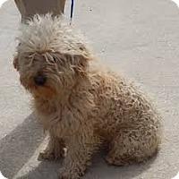 Adopt A Pet :: Sandy - Aqua Dulce, CA