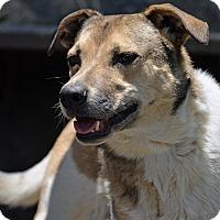 Adopt A Pet :: Cutie - Mountain Center, CA