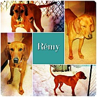 Adopt A Pet :: Remy ADOPTED - Ontario, ON