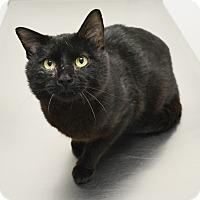 Adopt A Pet :: Bandit - Springfield, IL